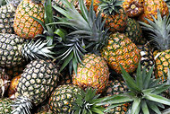 Pineapples at a Dole plantation in the Philippines.