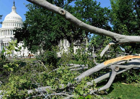 Trees littered the east lawn of the Capitol in Washington